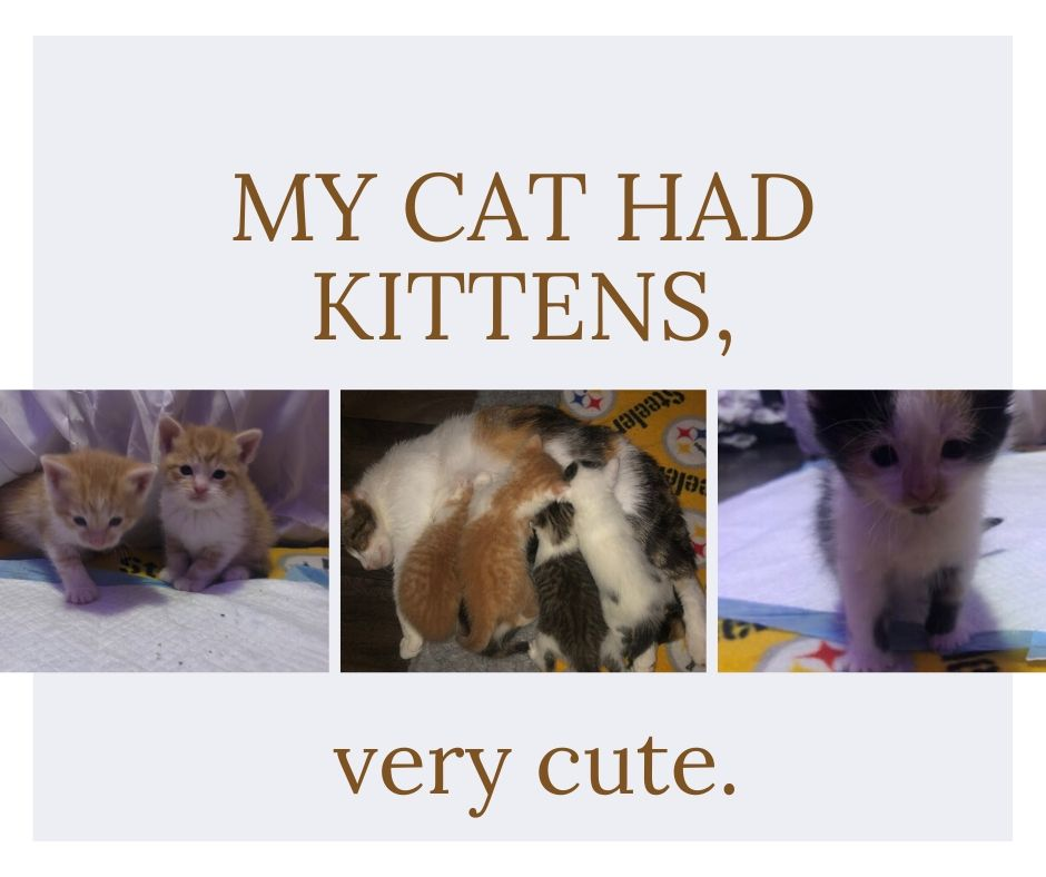 My-cat-had-kittens